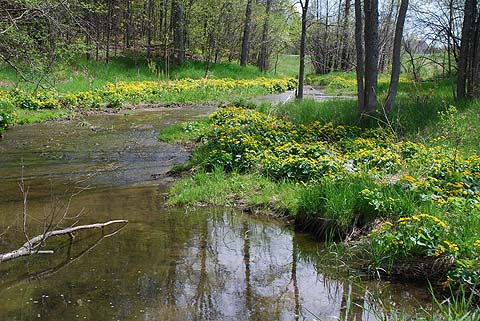 A small stream running through Almonte Town Park