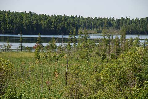 Open fen at the north end of Lowney Lake.